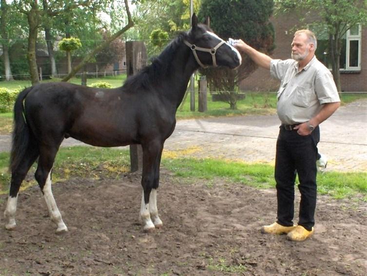 Gezocht: paarden verzorgerster