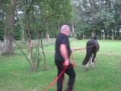 Paarden | Toebehoren paarden verzorgerster
