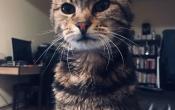 Barb kitten